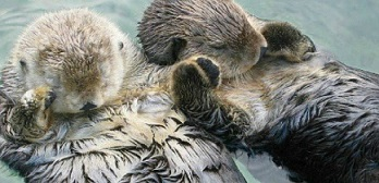 sea-otter-photographs-holding-hands