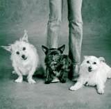 Phyllis_dogs